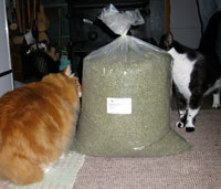Catman's cats sniffing 10lb. bag of catnip